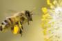 """Σουφλί: """"Μάστιγα"""" οι κλοπές μελισσιών, προστασία ζητά ο Μελισσοκομικός Σύλλογος από τις αρχές"""