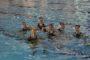 Με Χίο, ΠΑΟΚ, Οξυγόνο και Βόλο στο πρωτάθλημα Νεανίδων ο Νηρέας Ορεστιάδας