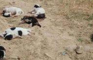 19 περιστατικά κακοποίησης ζώων το πρώτο επτάμηνο του '18 στην Ροδόπη!
