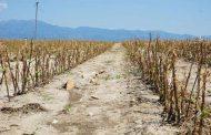 Στην Κομισιόν έφτασε το θέμα των πληγέντων αγροτών!