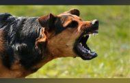 Σέρρες: Σε σοβαρή κατάσταση 9χρονος ύστερα από επίθεση σκύλων!