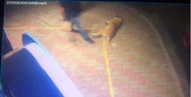 Κομοτηνή: Περαστικός κλώτσησε σκύλο - Τώρα θα αναγκαστεί να πληρώσει 30.000 ευρώ