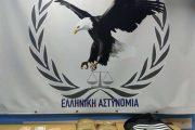 Έβρος: Αλλοδαπός συνελήφθη με 3,4 κιλά ηρωίνης!